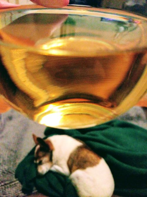 Wine above dog image